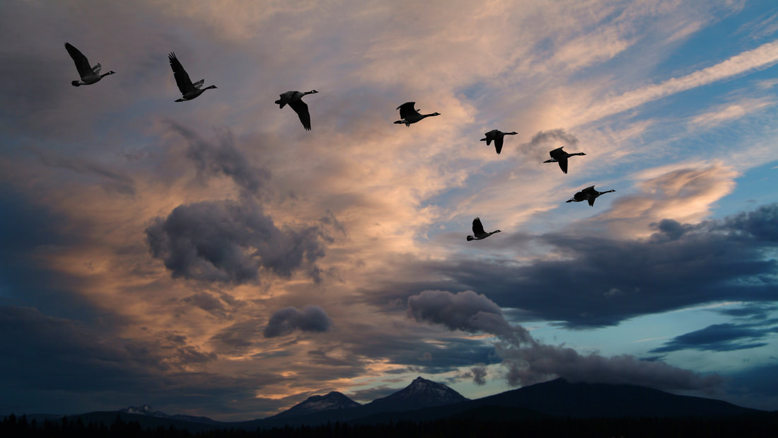Eight birds flying in V formation. In the background, a striking blue sky with clouds, the light making them appear in shades of dark blue and light rose.